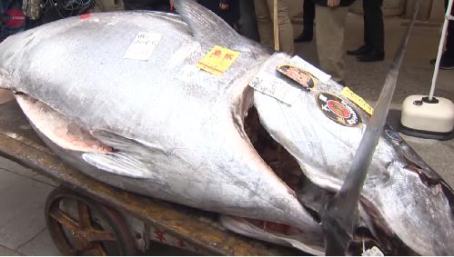【マグロの初競り豊洲2020】漁師は誰?過去10年釣った人や落札価格まとめ