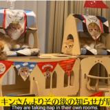 【佐藤健】ヒカキン猫のお城プレゼントの購入先や価格は?